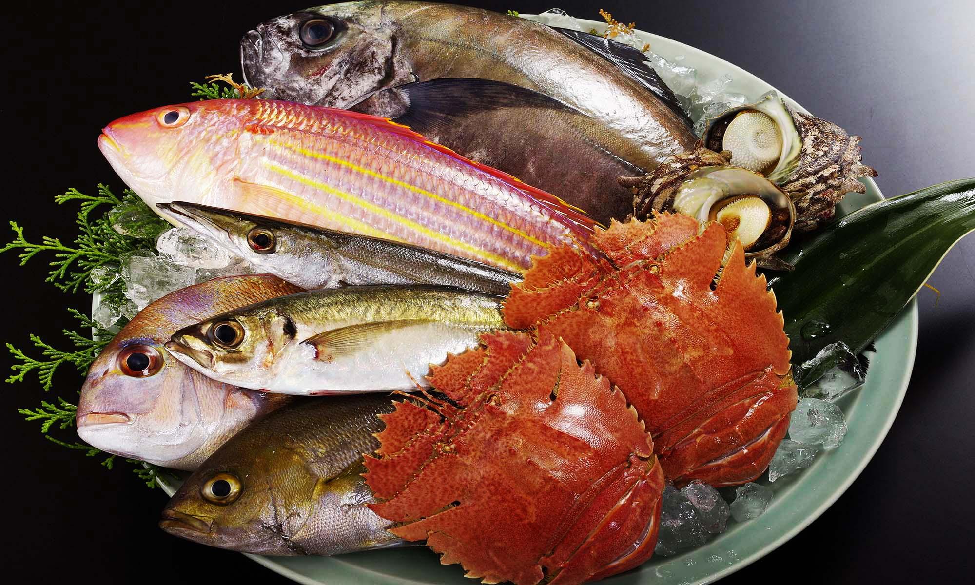 生月島の魚たち